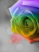 Roses colors (2)
